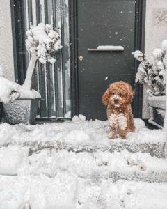 σίση χριστίδου σκυλί χιόνι