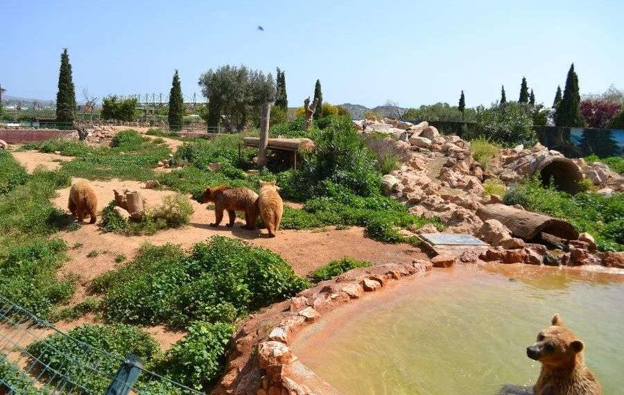 Αττικό Ζωολογικό Πάρκο: Άνοιξε για τους επισκέπτες μόνο με ραντεβού