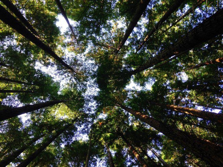 Παγκόσμια Ημέρα Περιβάλλοντος 2021: Σάββατο 5 Ιουνίου
