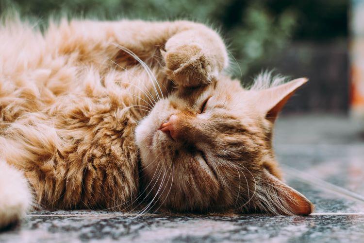 Ιστορική απόφαση στην Πάτρα: 23χρονος στη φυλακή για θανάτωση γάτας