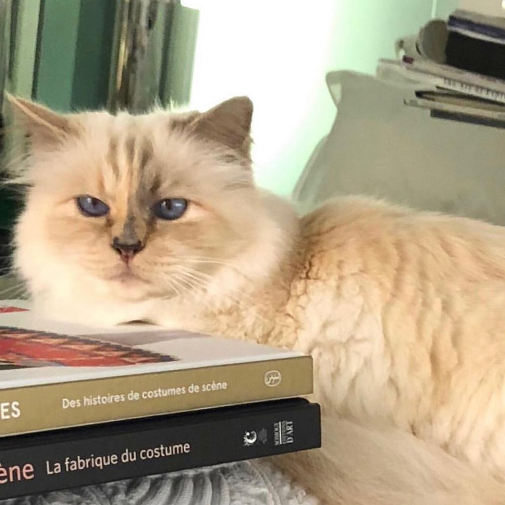 Καρλ Λάγκερφελντ: Σε δημοπρασία τα αντικείμενα της γάτας-κληρονόμου του
